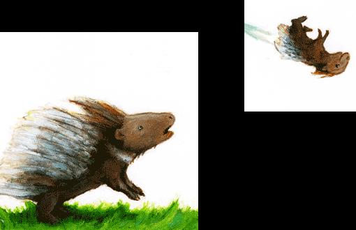 Zoom, Stachelschweinbaby im Flug,