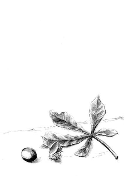 Kastanie Zeichnung