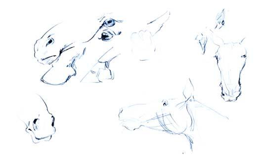 Pferde Zeichnung